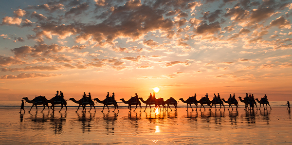 Broome Camel Sunset
